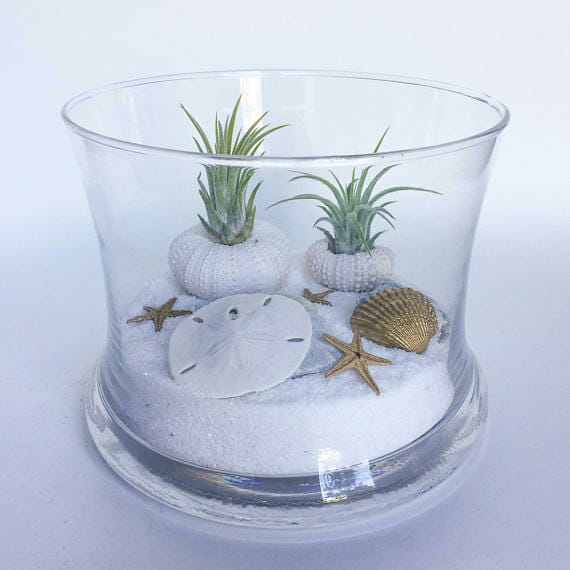 beach gifts Terrarium Kit