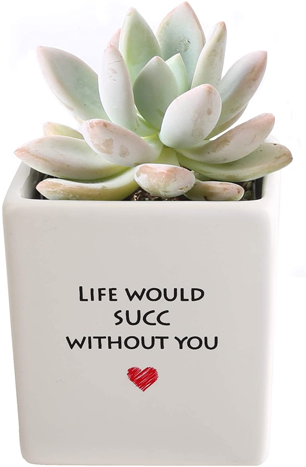 thank-you-gifts-succulant