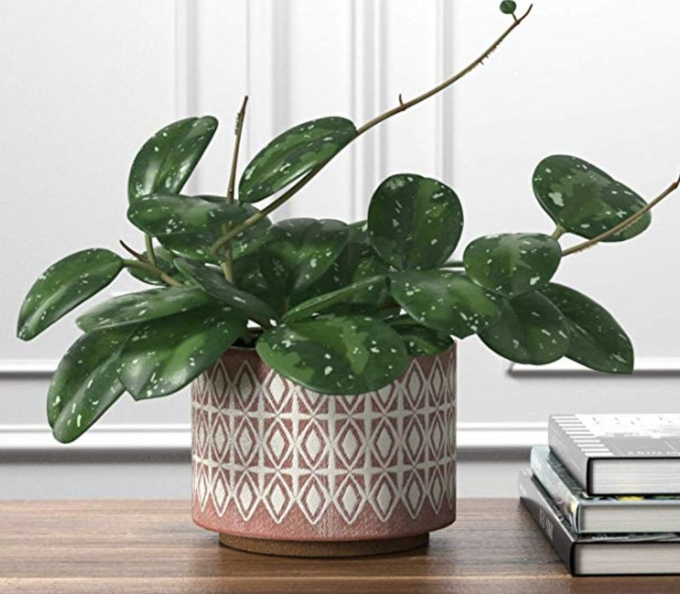 housewarming-gifts-plant