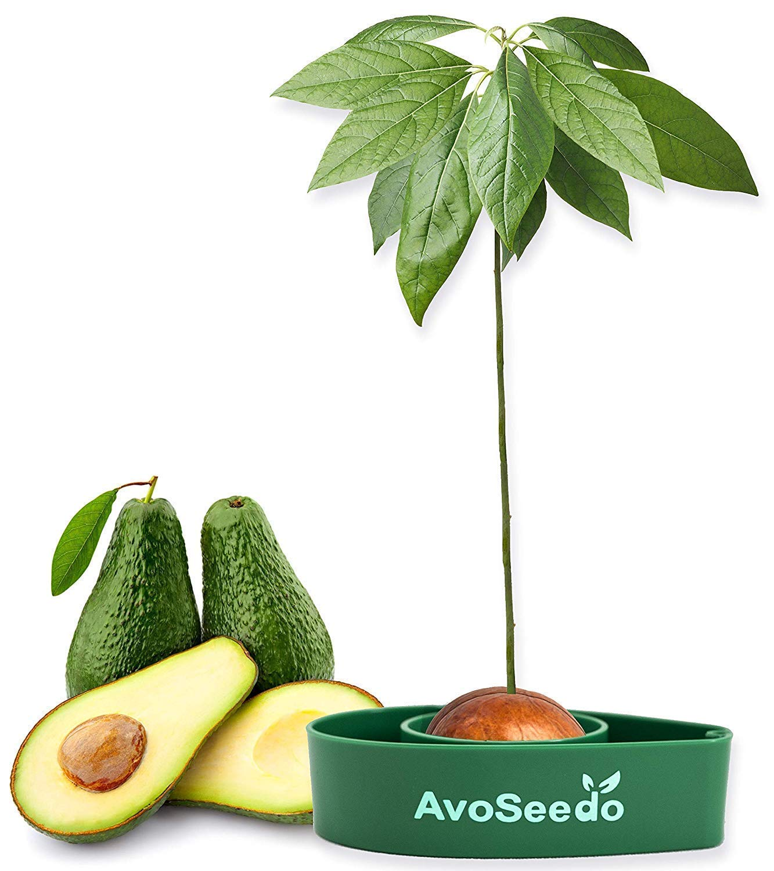 dirty-santa-gifts-avocado