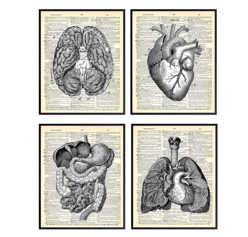 gifts-for-doctors-vintage-medical-prints