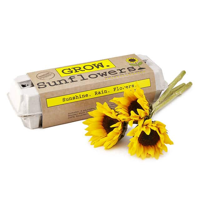 sunflower-gifts-grow-kit