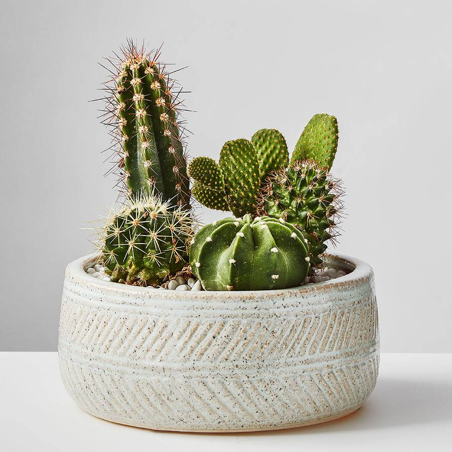 gifts-for-people-who-have-everything-cactus