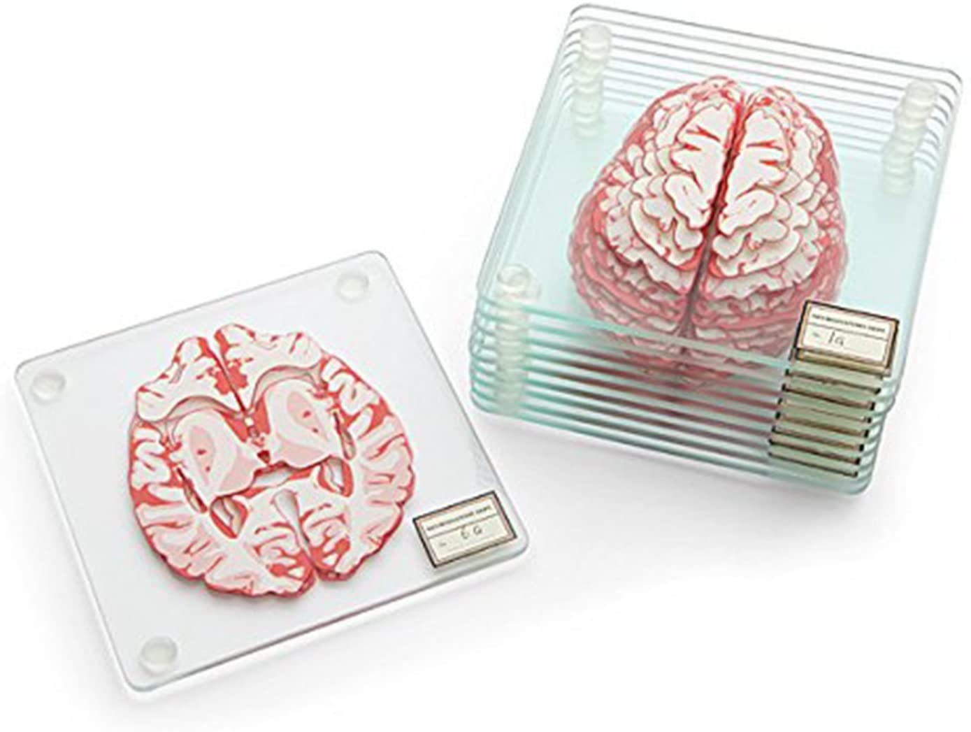 science-gifts-brain-coasters