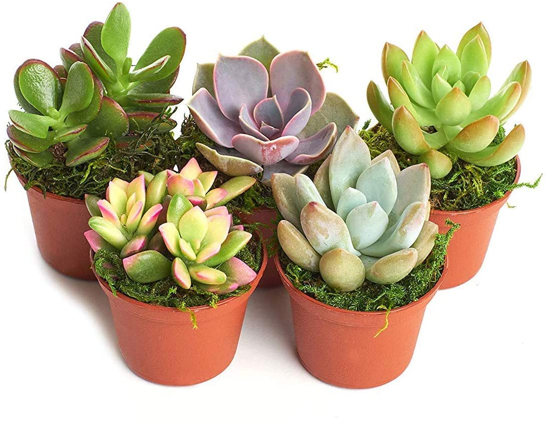 80th-birthday-gifts-succulents