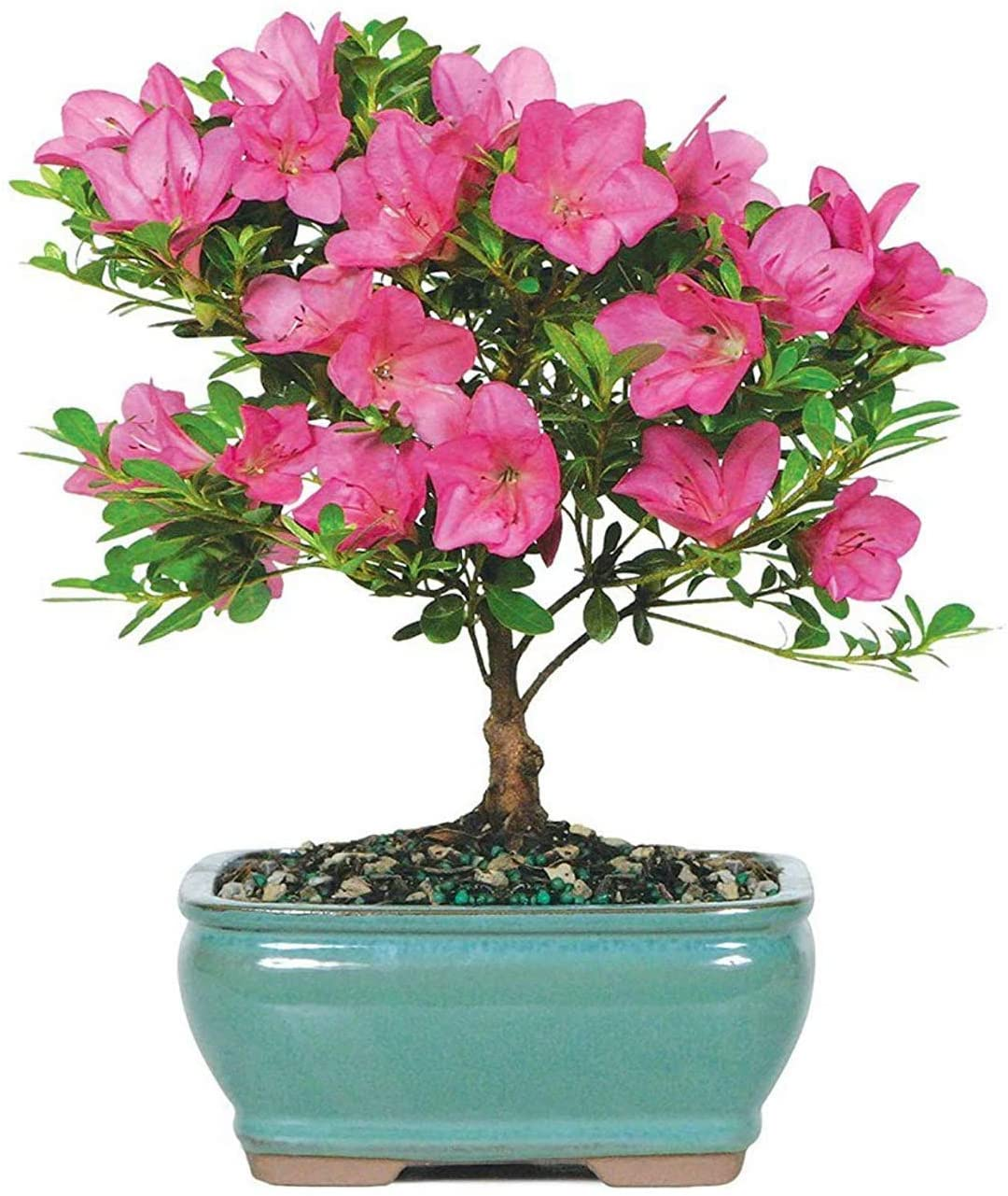 mothers-day-gifts-from-son-tree