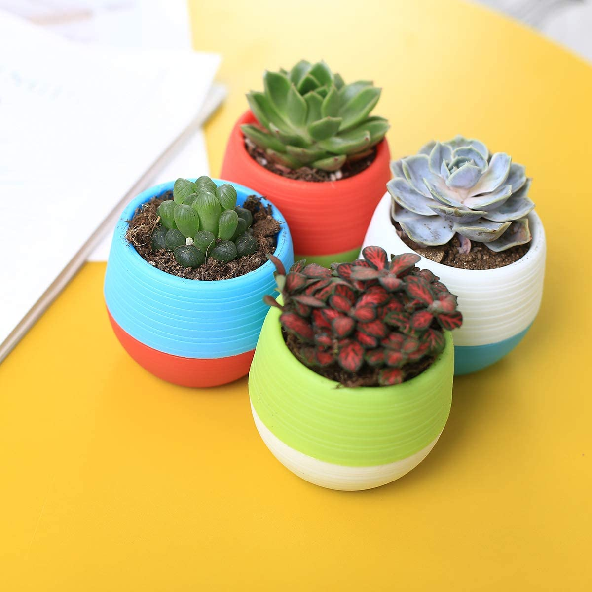 end-of-year-gifts-for-students-encouragement-succulents