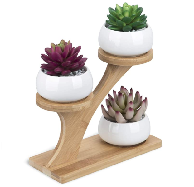 gifts-for-coworkers-succulent-plants