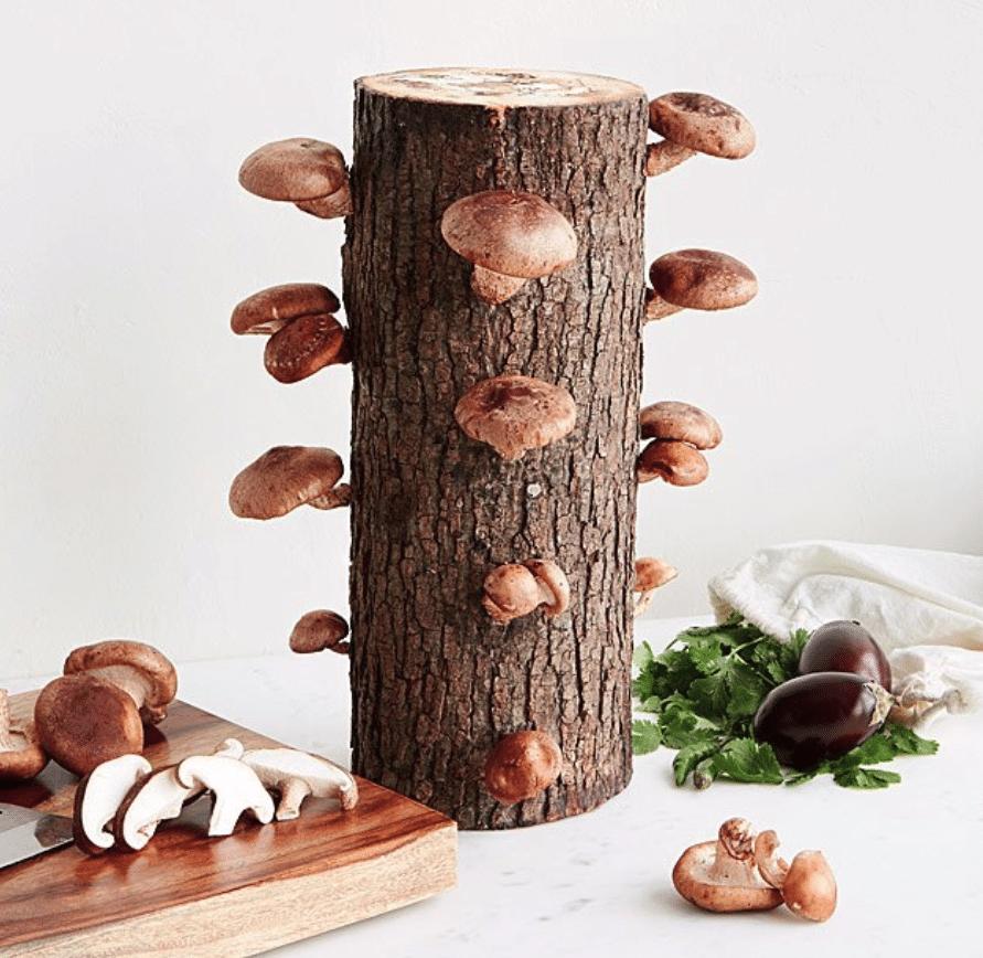 manly-gifts-shiitake-mushroom-log-kit