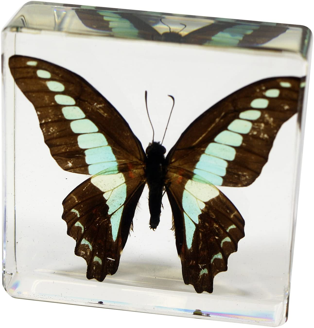 butterfly-gifts-paper-weight