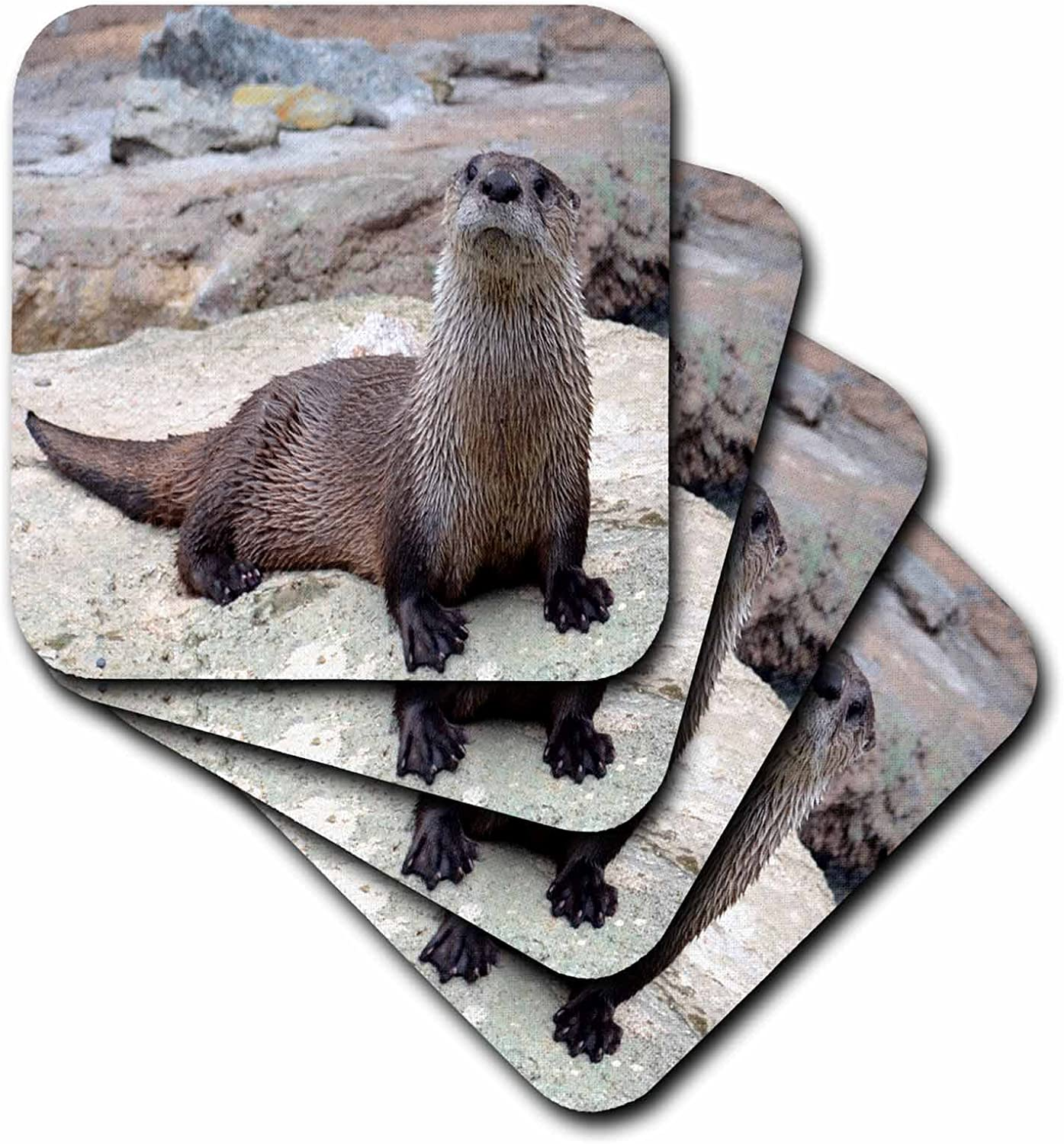 otter-gifts-coasters