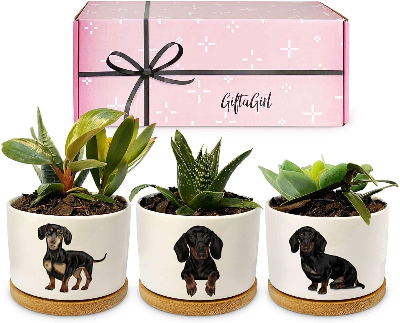 dachshund-gifts-pots